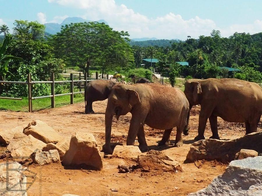 Pinnawala i wybieg dla słoni