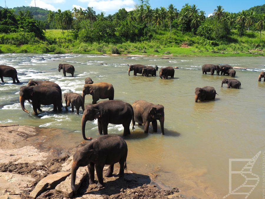 Kąpiel słoni w Pinnawala