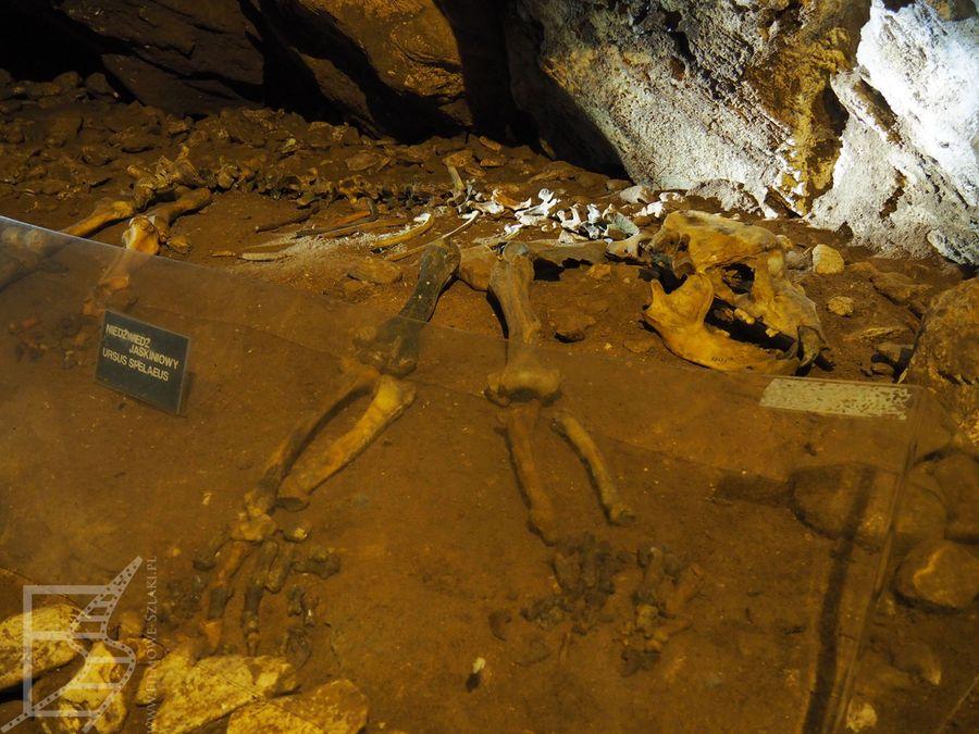 Wystawa kości zwierząt w jaskini
