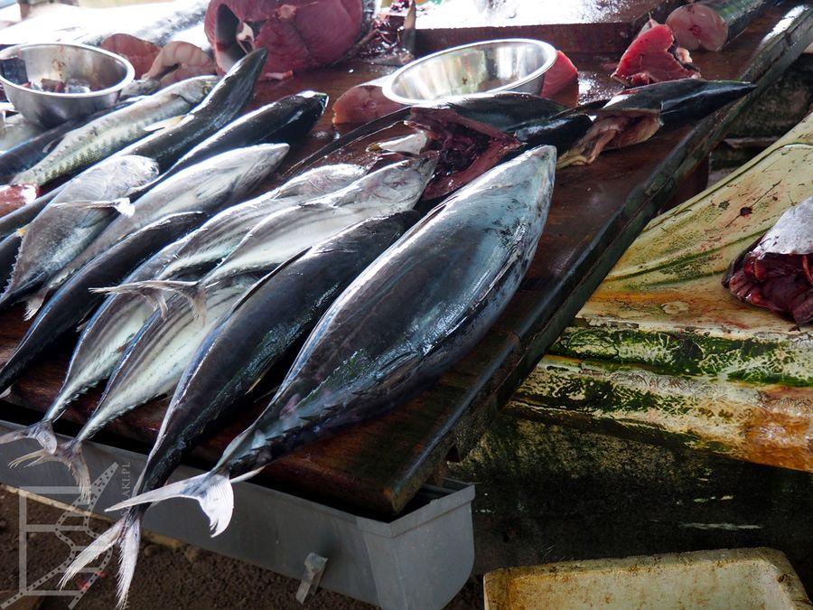 Targ rybny pod fortem Galle