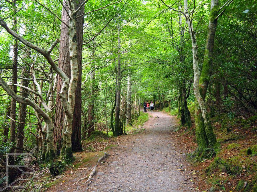Leśna ścieżka w Parku Narodowym