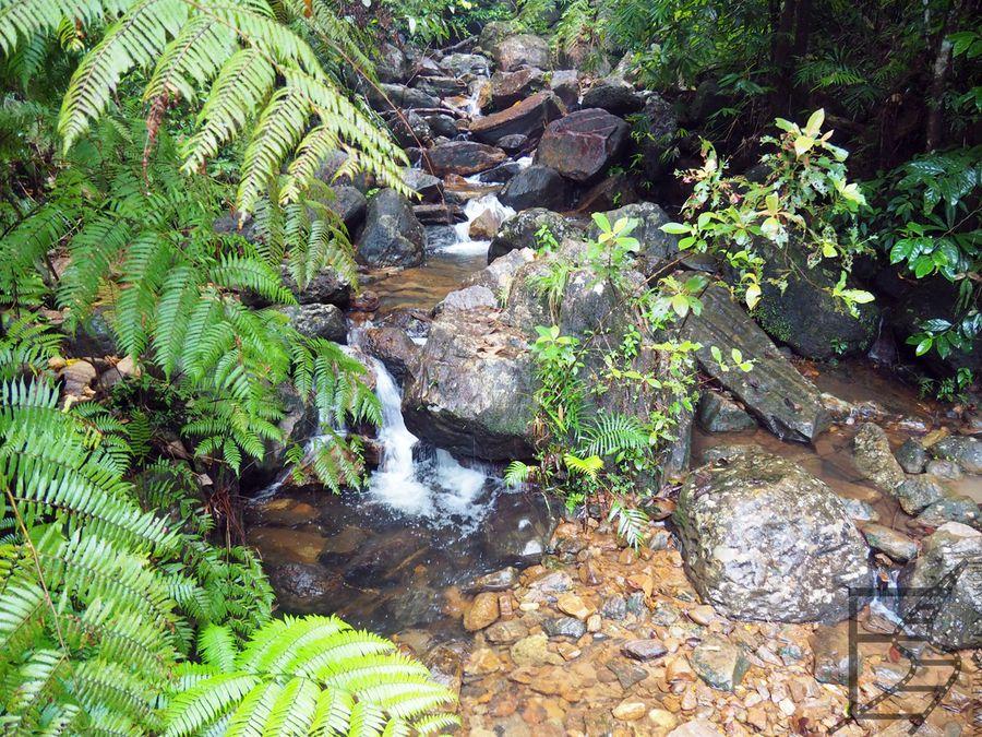 Leśny strumień