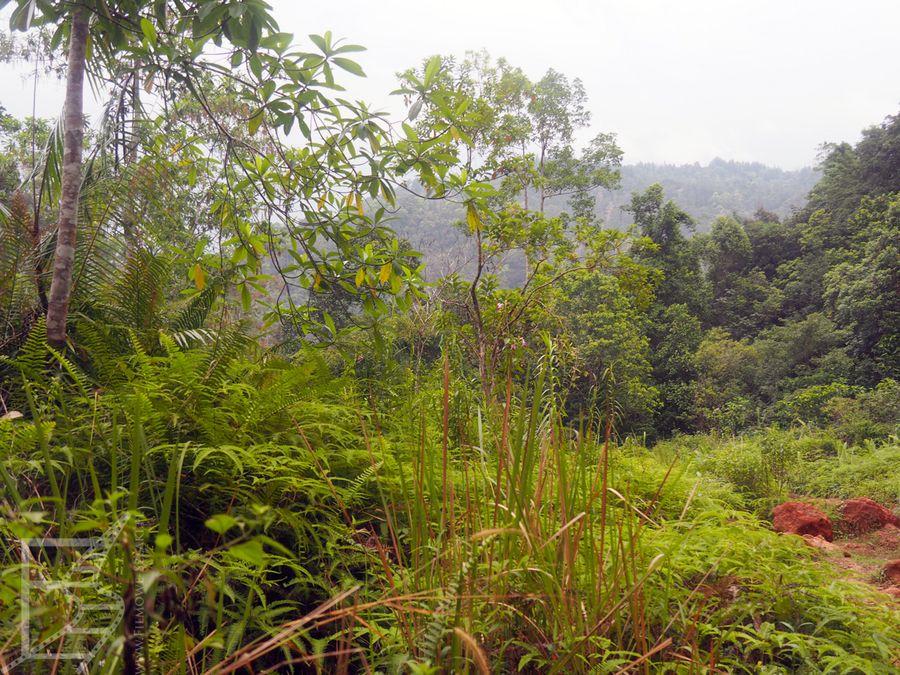Las deszczowy na Sri Lance