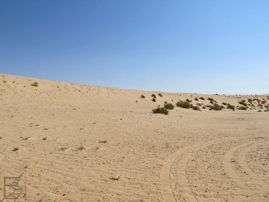 Szaat al-Dżarid