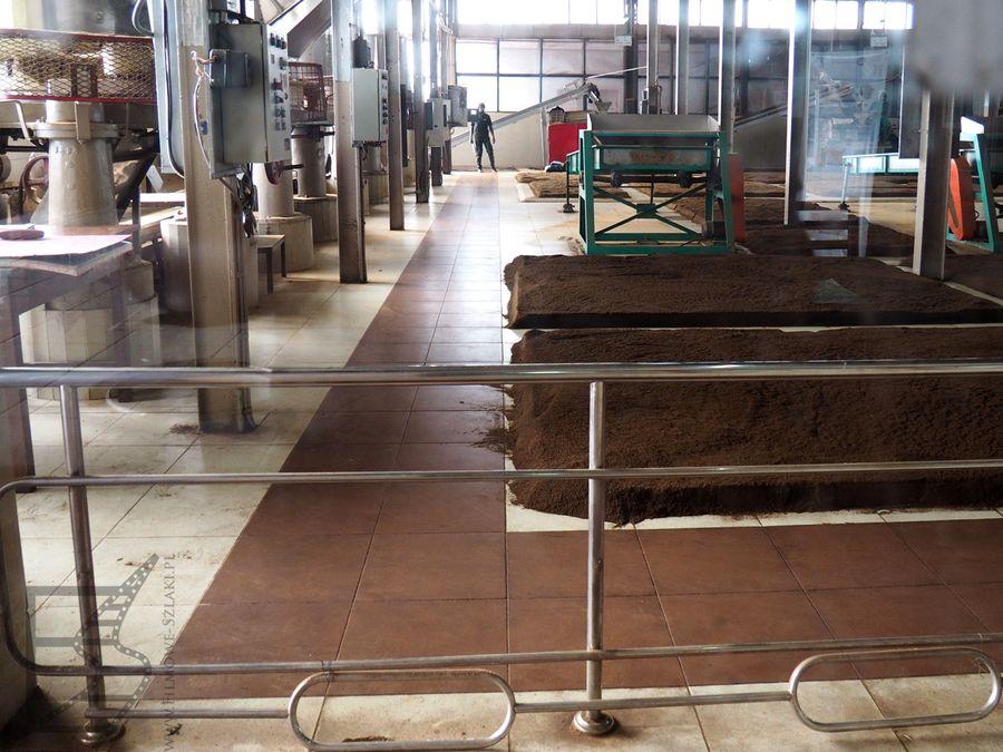 Suszenie herbaty w fabryce