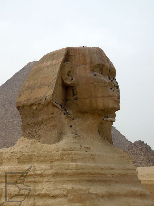 Głowa Sfinksa