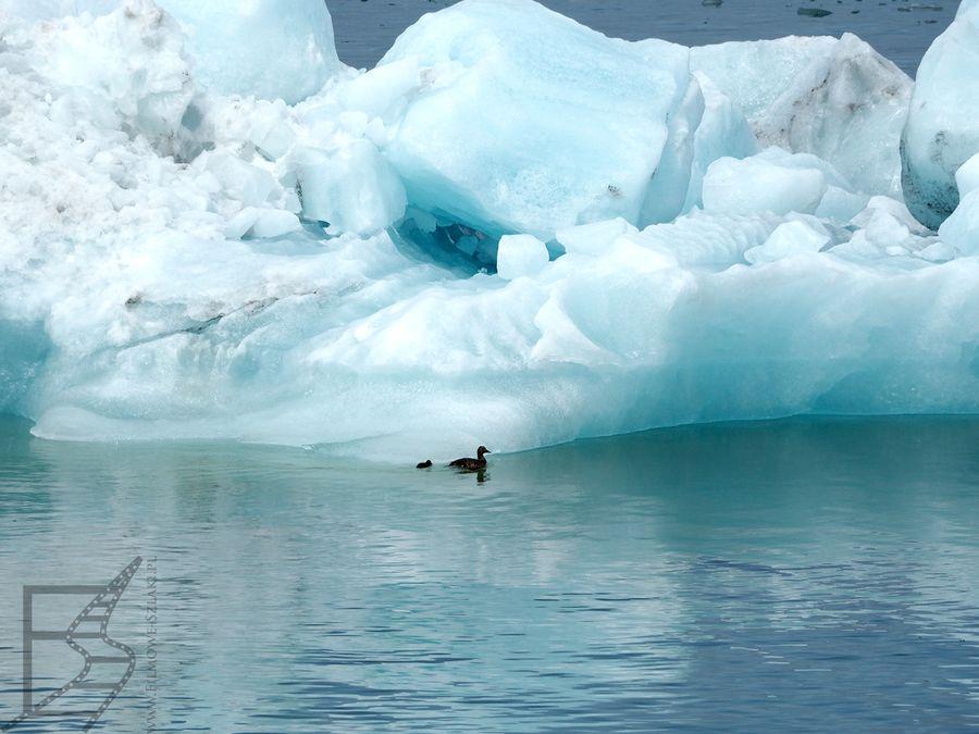 Kry lodowe mają przepiękny kolor>
